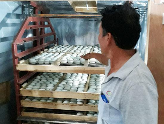 Ông Nguyễn Hòa bên lò ấp trứng vịt trời. Ảnh: C.N