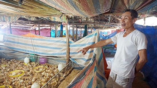 CCB Phùng Tấn Trưng với trang trại gà hơn 8.000 con