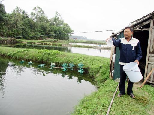 Nuôi tôm là thế mạnh của xã Tam Phú và hiện nay có nhiều mô hình nuôi tôm như của anh Trương Công Văn thu lãi hơn 200 triệu đồng/năm.
