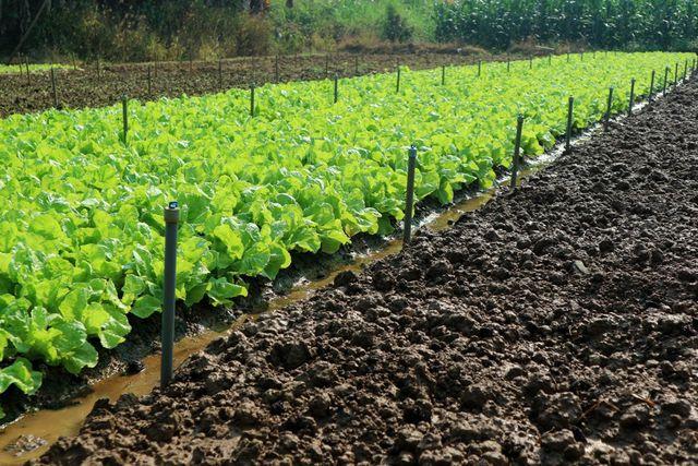 Vườn rau của bà Võ Thị Hoa được đầu tư hệ thống tưới, tiêu tự động