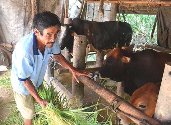 Nông dân Điện Bàn thi đua sản xuất